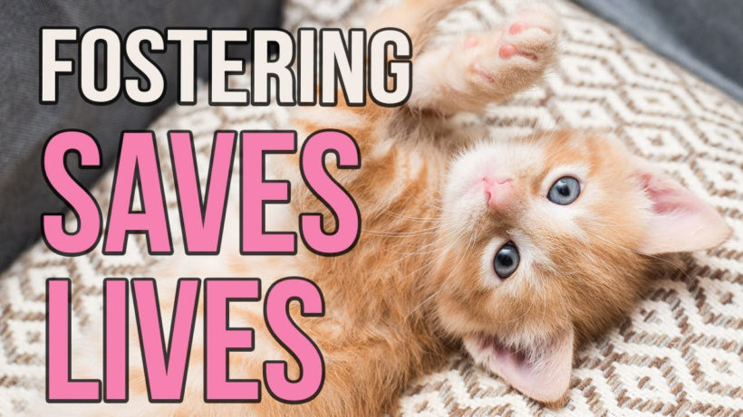 Adventures in Fostering
